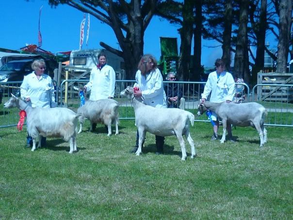 Home - Cornwall Goatkeepers Association