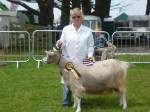 Kernow Best in Show Gorsefield Cylviane