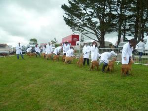RC Golden Guernsey Kids Line up